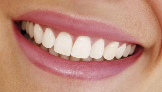 1 hàm răng có bao nhiêu cái